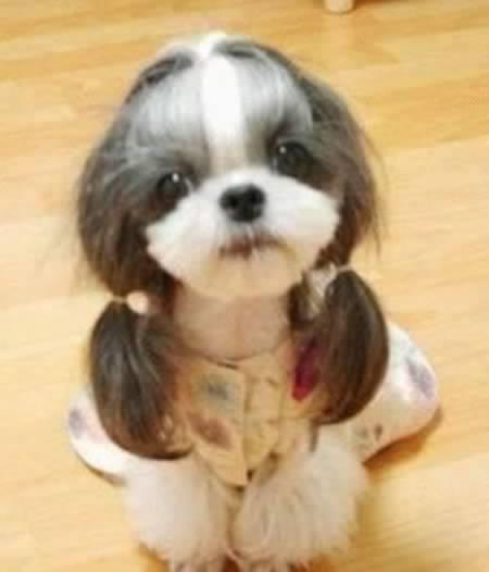 Anjing model rambut wanita