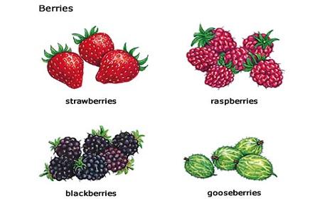 Macam buah berry
