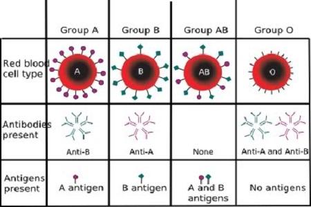 Tipe Golongan Darah