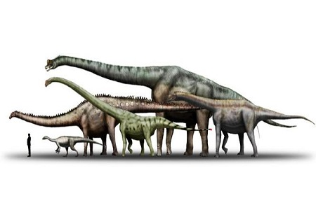 Sauropoda Dino